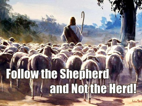 follow-shepherd